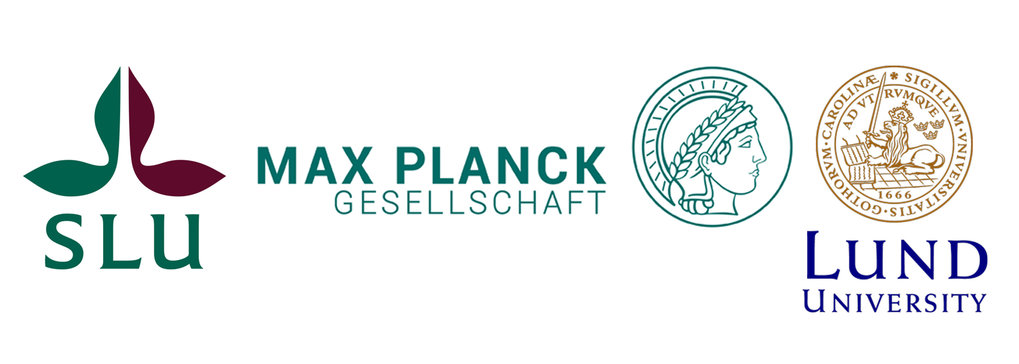 The Max Planck Center on next Generation Insect Chemical Ecology (nGICE) is a high level cooperation between the Max Planck Society, the Swedish University of Agricultural Sciences (SLU), and Lund University. The purpose is to allocate complementary resources, such as scientific expertise, techniques and equipment, to an urgent research field during 5 years. All partners contribute equally to the funding. The nGICE Center focuses on a better understanding of the consequences of global change on insect ecosystem services, outbreaks of invasive insect species and the spread of disease vectors into Europe through the lens of insect chemical communication systems.